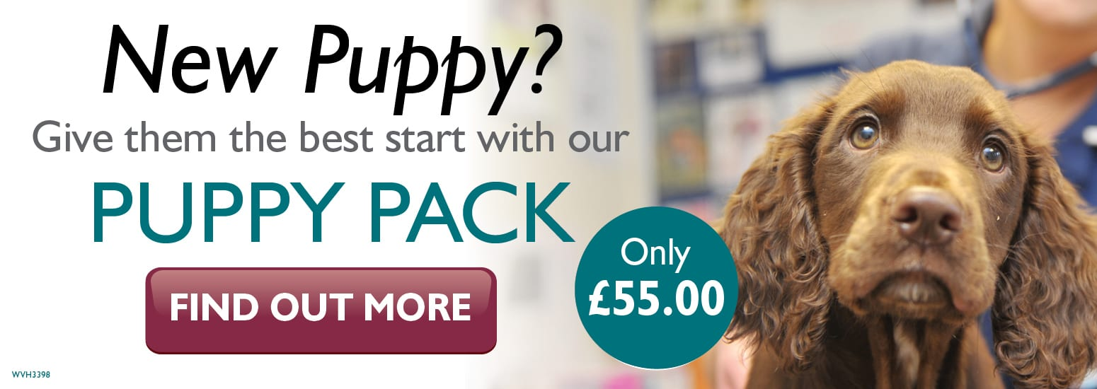 Puppy Pack covering puppy injections, flea & worm treatment, and much more for only £55 at vets in Manchester