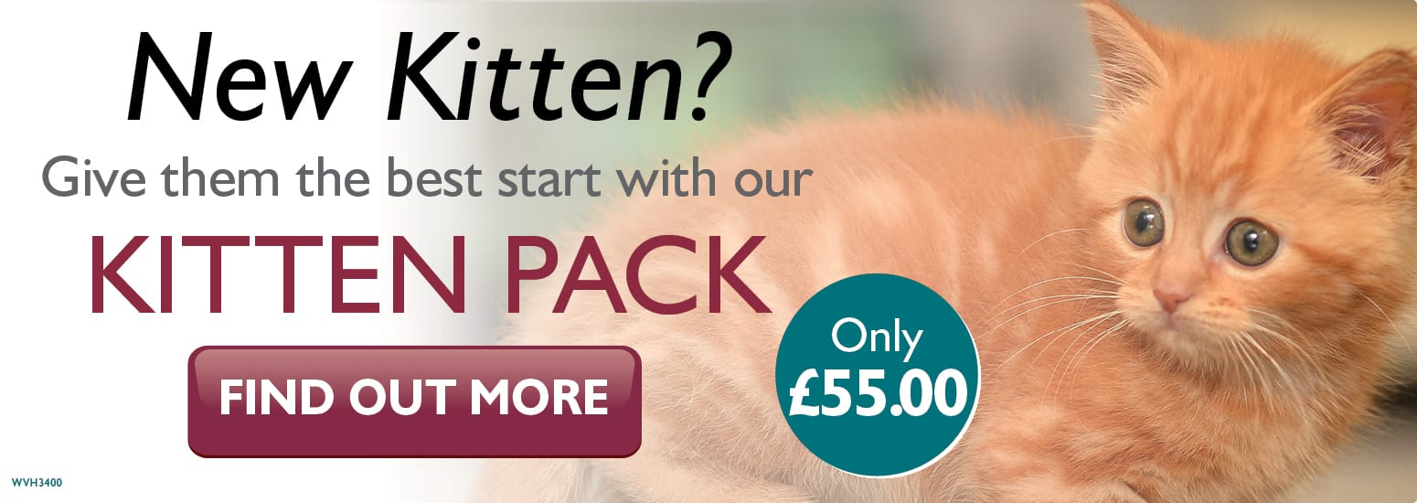 Kitten Pack covering kitten injections, flea & worm treatment, and much more for only £55 at vets in Manchester